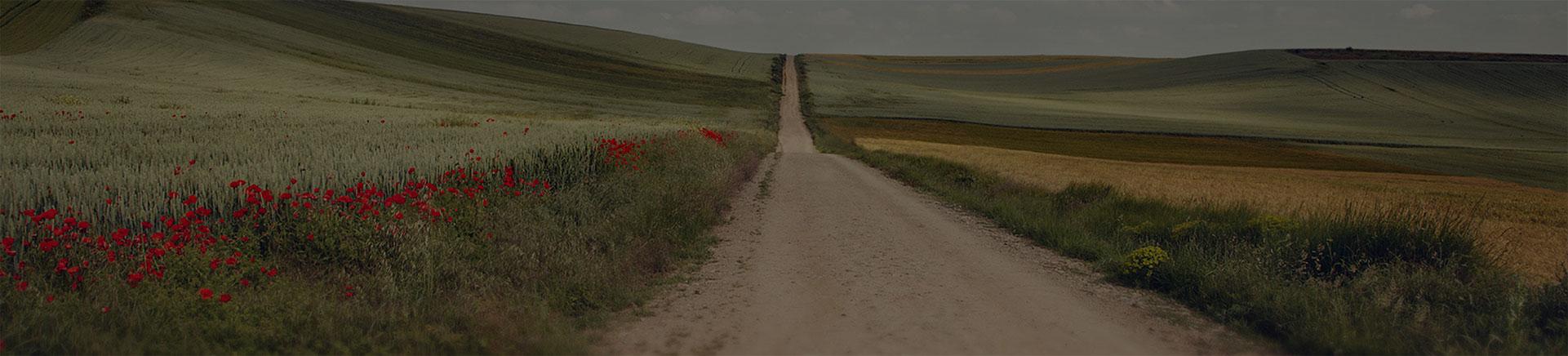 Camino Francés (The French Way)