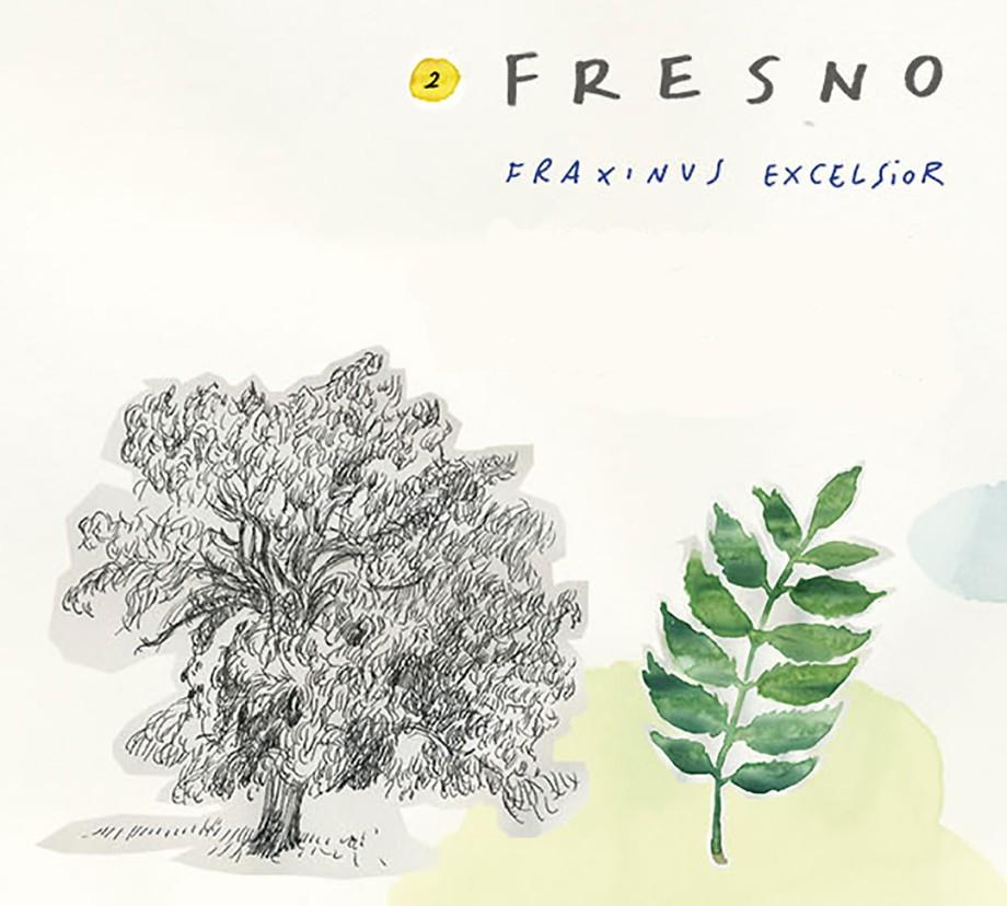 Fresno. Guía de árboles del Camino Francés
