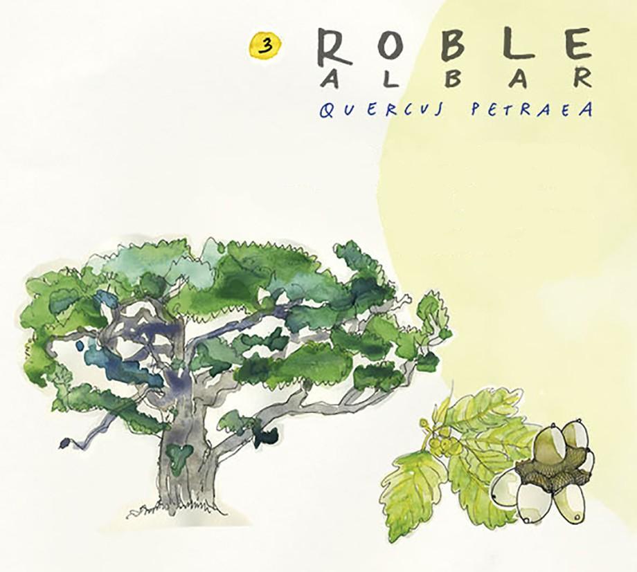 Roble albar. Guía de árboles del Camino Francés
