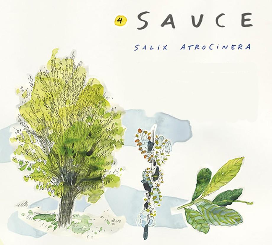 Sauce. Guía de árboles del Camino Francés