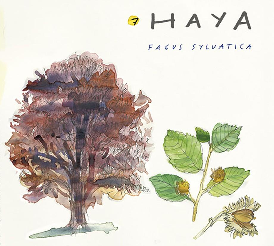 Haya. Guía de árboles del Camino Francés