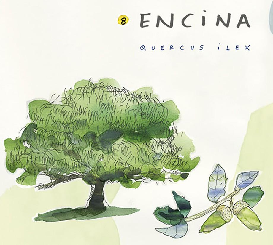 Encina. Guía de árboles del Camino Francés