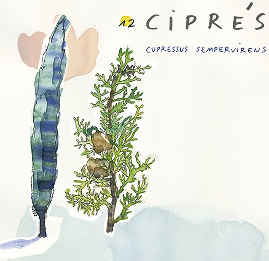 Ciprés. Guía de árboles del Camino Francés