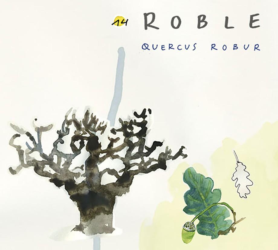 Roble. Guía de árboles del Camino Francés