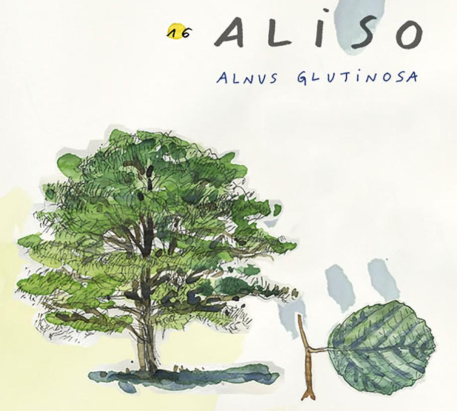 Aliso. Guía de árboles del Camino Francés