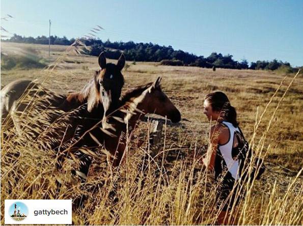 camino de santiago horse