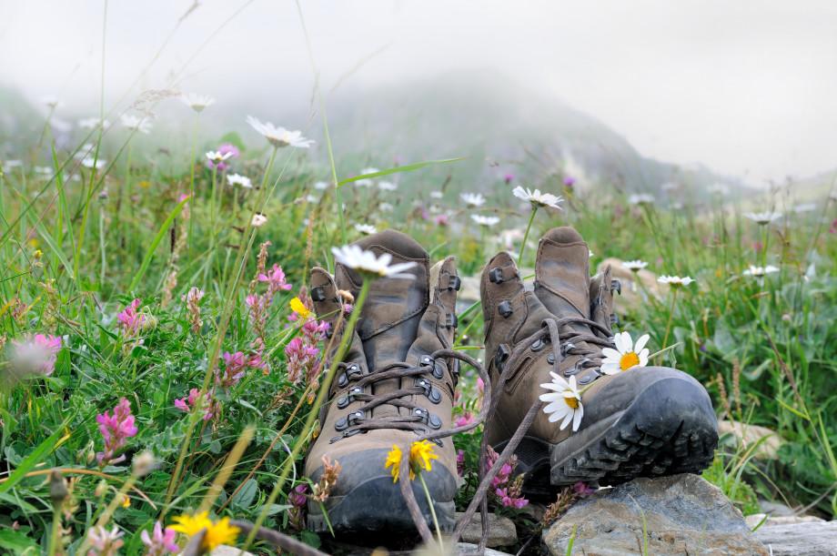 Sustentaible Camino: enviroment