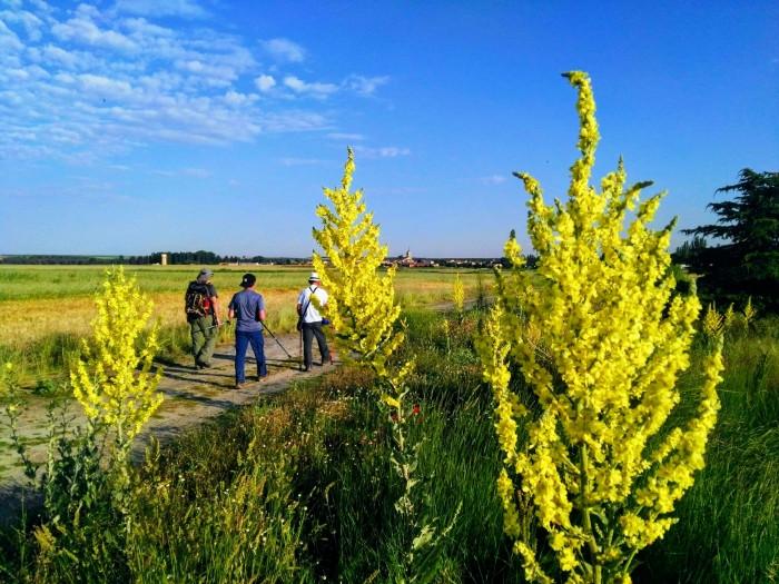 Entre azul y amarillo, fotografía ganadora del premio del público en el concurso Los colores del Camino