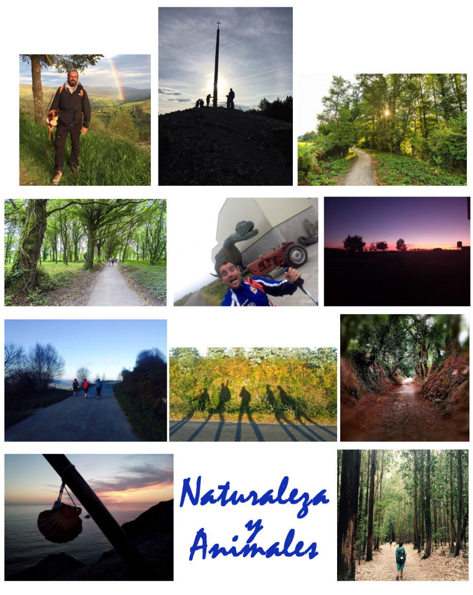concurso fotografico la magia del camino naturaleza