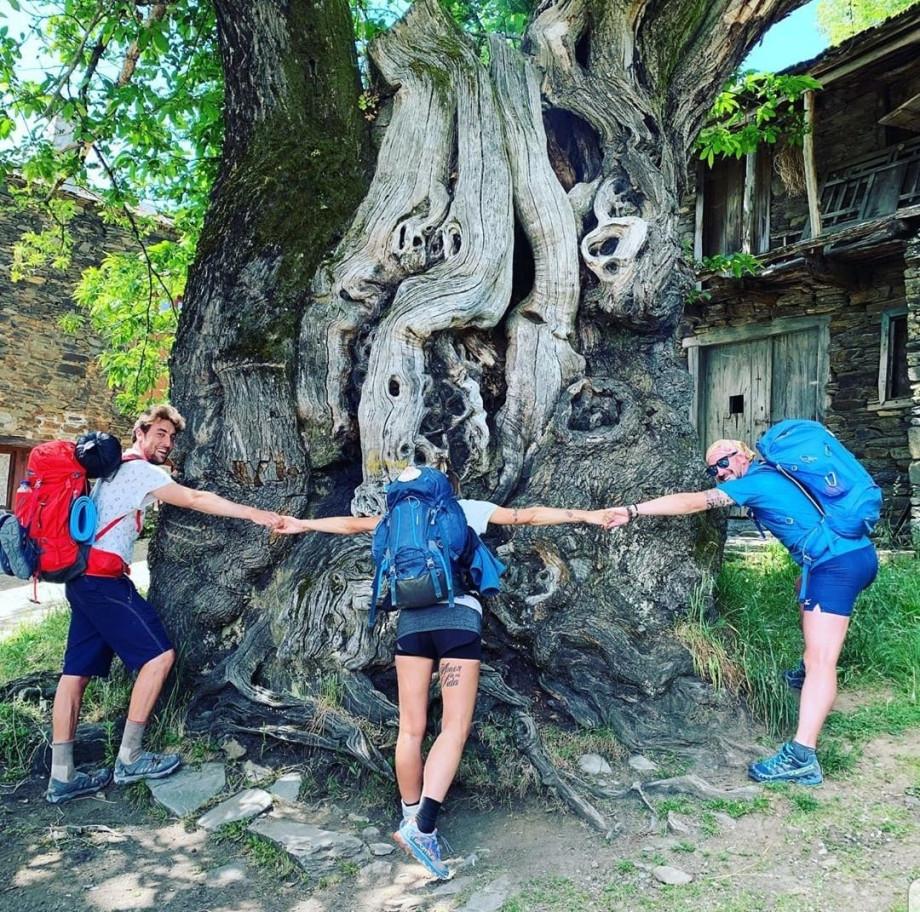 Peregrinos abrazando el castaño de Ramil, a la entrada de Triacastela