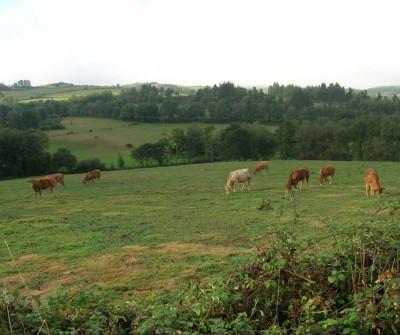 Paisaje rural entre Miraz y Sobrado