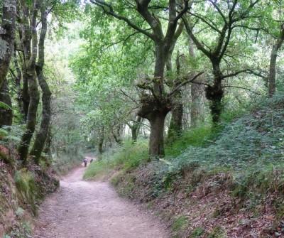 Camino de Santiago Francés llegando a O Pedoruzo