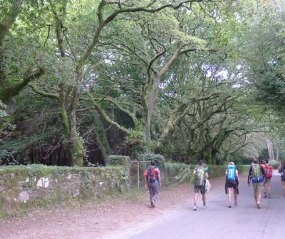Camino Francés entre Arzúa y O Pedrouzo