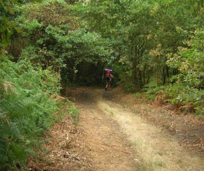Camino del Norte entre Baamonde y Miraz
