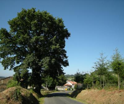 Camino del Norte a su paso por Boimorto