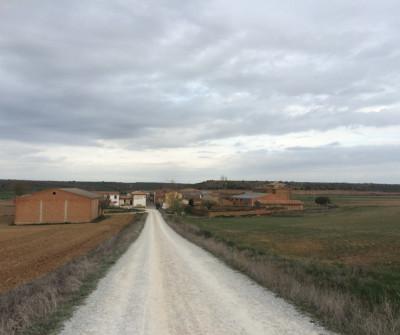 Camino Francés entre Carrión de los Condes y Terradillos de los Templarios