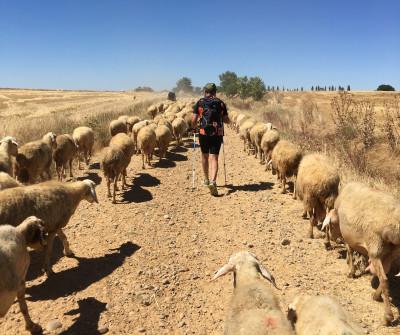 Camino de Santiago Francés llegando a Boadilla del Camino