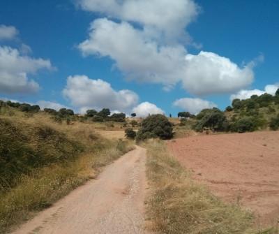 Camino Francés entre Logroño y Nájera