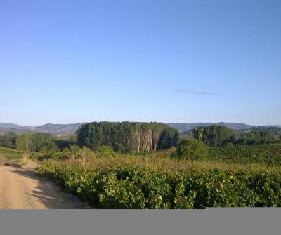 Etapa Terradillos de los Temparlios - El Burgo Ranero del Camino Francés