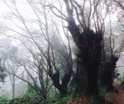 peregrinos en el Camino de Santiago entre Triacastela y Sarria