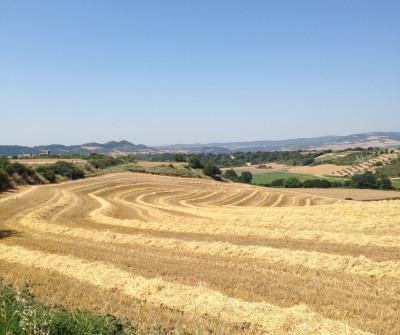 Camino Francés de Pamplona a Puente la Reina