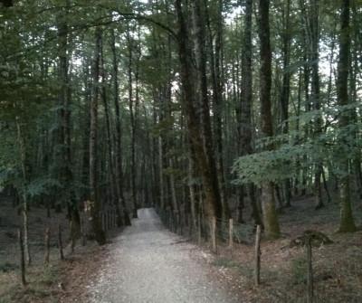 Paisaje boscoso entre Zubiri y Pamplona