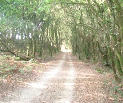Montes del Camino Inglés