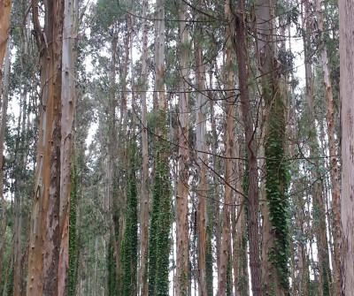 Etapa Pontedeume-Betanzos del Camino Inglés