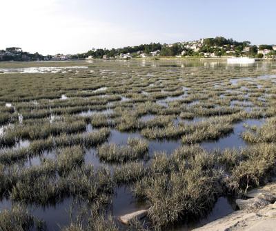 Estuario de A Ramallosa, Camino Portugués por la Costa