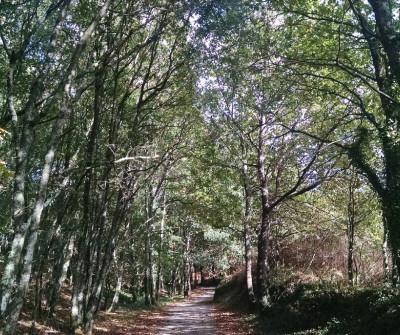 El Camino Portugués en su paso por Milladoiro