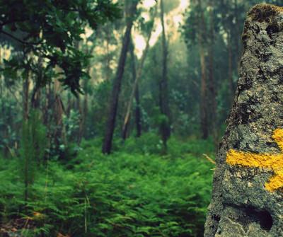 Flechas amarillas en el Camino Portugués