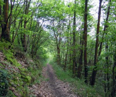 Paisaje del Camino Primitivo entre Pola de Allande y A Mesa