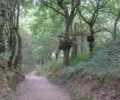 Camino Primitivo entre Melide y O Pedrouzo