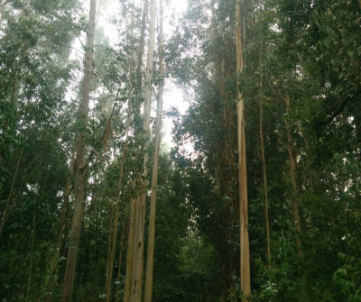 Paisajes boscosos antes de llegar a O Pedrouzo