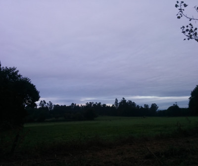 Etapa Melide - O Pedrouzo del Camino Primitivo