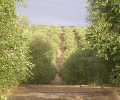 Camino de Castilblanco