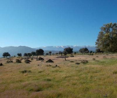 Monte en Vía de la Plata